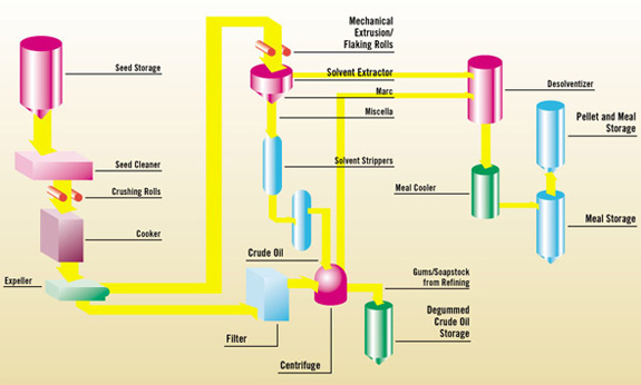 Edible Oil xtraction Process