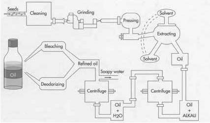 edible oil manufacturing process