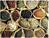 small multi oil processing plants for edible oil