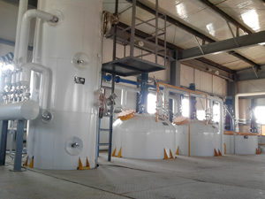 Soybean 