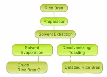 The Process of Rice Bran Oil Pressing